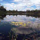 Lake Reflections by Paul  Donaldson