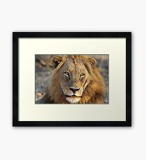 Majigilane male (The Sabi Sands will soon belong to our coalition) Framed Print