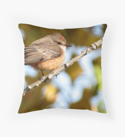 Vermilion Flycatcher ~ 1st Winter Male Throw Pillow