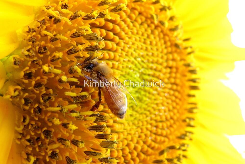 Pollination Series ~ 6 by Kimberly Chadwick