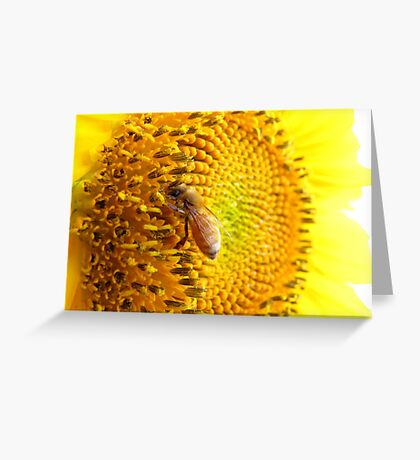 Pollination Series ~ 6 Greeting Card