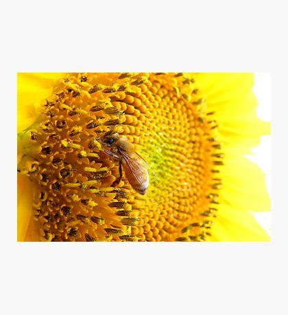 Pollination Series ~ 6 Photographic Print