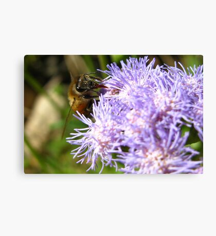 I Bee Collecting More Canvas Print