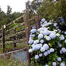 Cattle Ramp by Digby