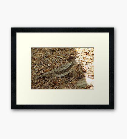 Horned Lizard ~ Desert Framed Print
