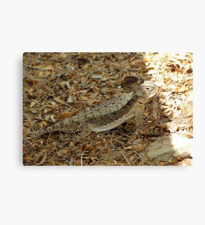 Horned Lizard ~ Desert Canvas Print