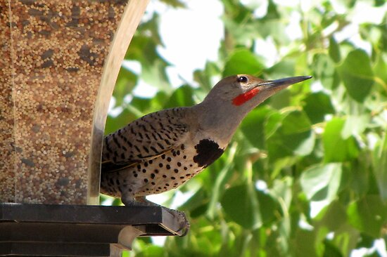 (BFF's) Gilded Flicker ~ Male  by Kimberly Chadwick