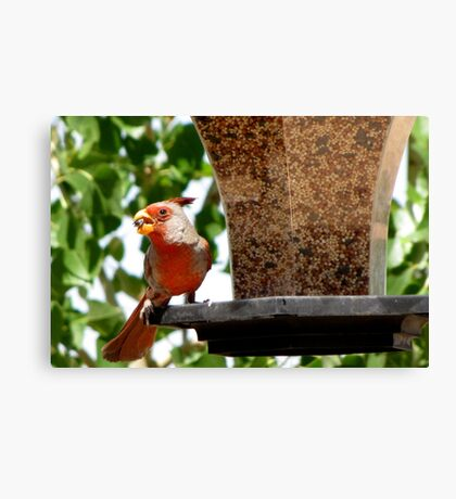 (BFF's) Pyrrhuloxia ~ Male Canvas Print