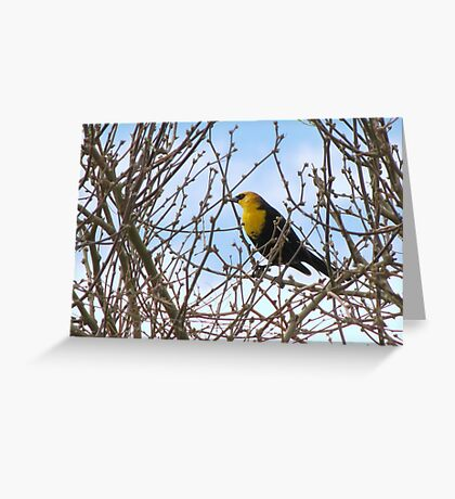 Yellow-headed Blackbird ~ Male Greeting Card