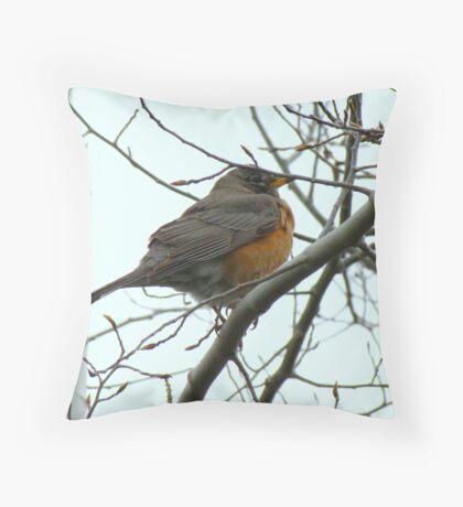 American Robin ~ Bend,Oregon Throw Pillow