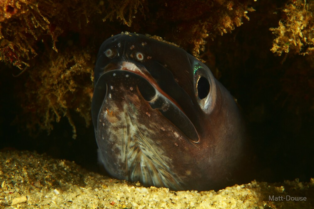 Swansea Eel by Matt-Dowse