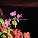 Flowers After Sunset - Flores despues de la Puesta del Sol by PtoVallartaMex