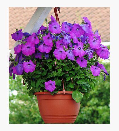 Hanging Basket with Velvety Purple Petunias Fotodruck