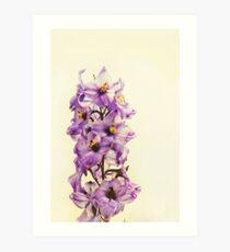 Purple Larkspur Delphinium Art Print