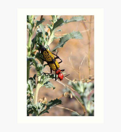 Iron-Cross Blister Beetle Art Print