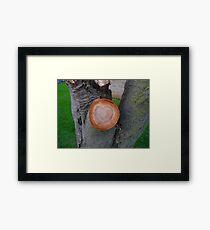 Love Wood Framed Print