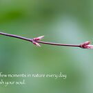 Nourish Your Soul by Elysian Photography ~ Art from the Heart
