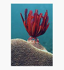 Red Feather Photographic Print