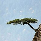 One tree by RichImage