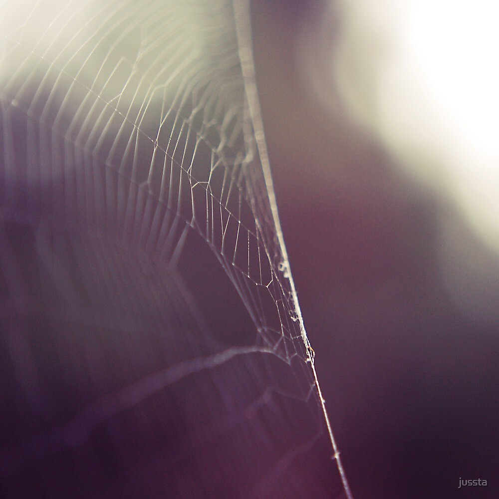 Spiderweb by jussta