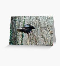 Turkey Vulture - Cathartes aura Greeting Card