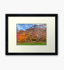 Fall Branches Framed Print