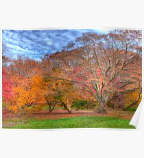 Fall Branches Poster