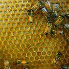 Beehive by Trish Peach