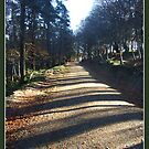 Forrest path by dOlier