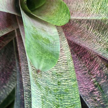 Succulent by friskodisko
