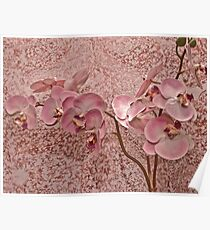 Soft Pink Orchid Blossoms Poster
