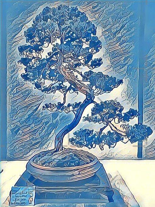 Bonsai Blue Juniper  by heidiannemorris