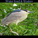 Water Fowl & Waders by Kimberly Chadwick