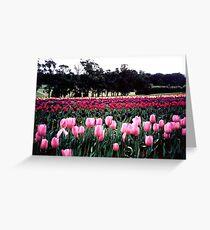 Sasafras - Dandenong Ranges National Park Vic Greeting Card