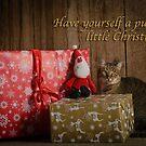 Furry Little Christmas by Dan Shalloe