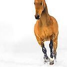 Golden horse in snow by Dan Shalloe