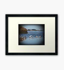Dancing Sea Gulls 2 Framed Print