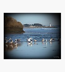 Dancing Sea Gulls 2 Photographic Print