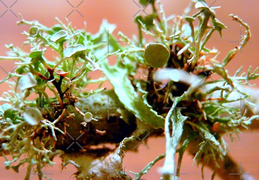 Lichen - Macro by Scott Mitchell