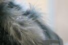 Feathers II by LynnEngland