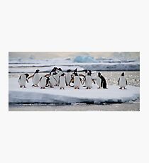 Gentoo Penguins Photographic Print