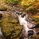 Autumn River by M.S. Photography/Art