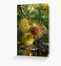 Banksia laricina flowers Greeting Card