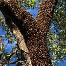 Buzzing Bees protect the Queen by Paul  Donaldson