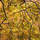 Viewd 438 *** Autumn Wonderland . Doctor Faustus. 2015. by © Andrzej Goszcz,M.D. Ph.D