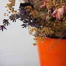Flowers  by Anca  Reichlmair