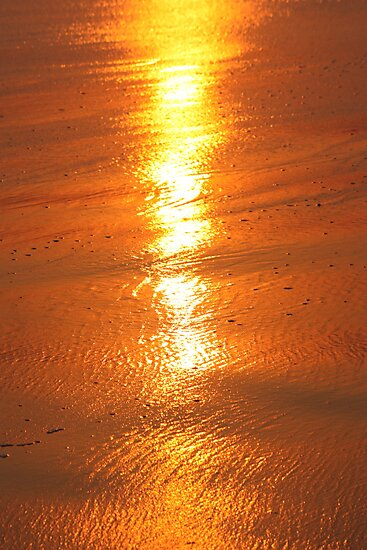 Sun on a beach 6988 by João Castro