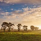 Glastonbury Trees and Mist by Robin Whalley
