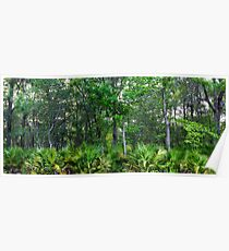 Maritime Forest Panorama Poster