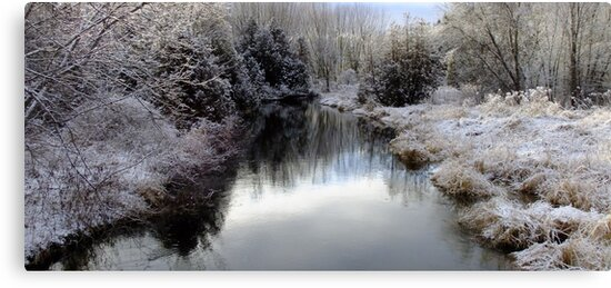 Winters Silver Light by Tracy Wazny